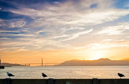 frisco: Beautiful Tranquil Seagull Sitting on Railing on San-Fransisco Pier Against Golden Gates Bridge . During Amazing Sunset of the Rare Golden Hour.Horizontal Shot