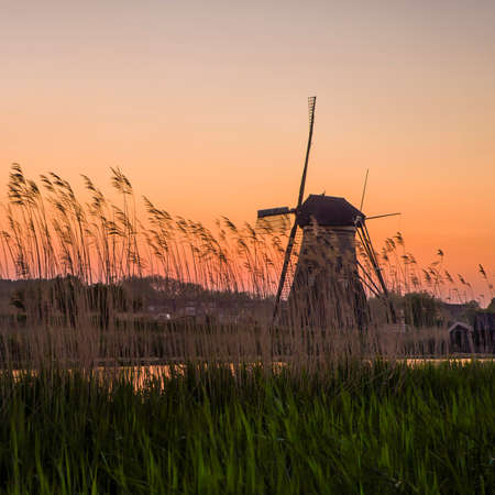 Black and White Contrast Image of Historic Dutch Windmill In Front of The Canal and Ears of Wheat Located in Traditional Village in Holland, The Netherlands. Shot at Kinderdijk During Golden Hour. Horizontal Shot Stock Photo