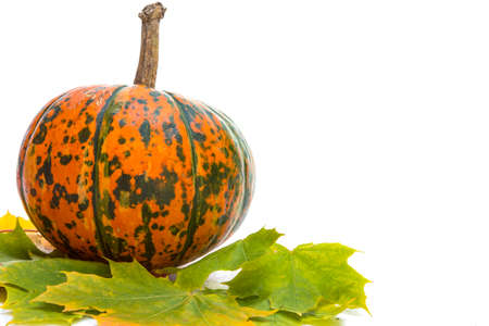 Closeup of Natural Yellow-Green Pumpkin with Maple Leaves Against White Background. Horizontal Shot Stock Photo