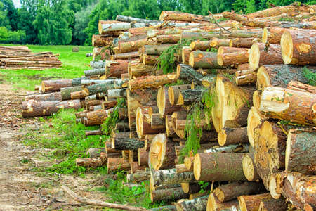 Ecology and Environment Concepts. Pine and Spruce Trees Logs Heaped Together in Bulk.Horizontal Image