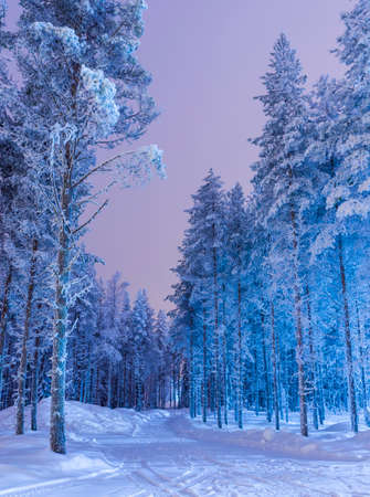 snowy christmas nordic forest model picturesque www