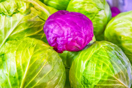 Fresh Cabbage of Green and Purple Colors.Horizontal Image Composition