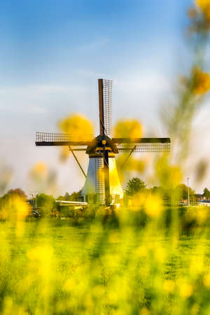 Dutch Windmill In Front of The Canal With Yellow Flowers in Frame. Located in Traditional Village in Holland, The Netherlands. Shot at Kinderdijk During Golden Hour. Vertical Image