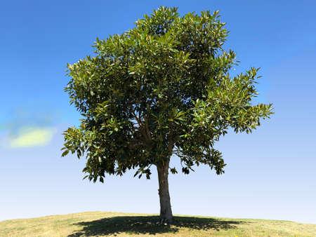バンヤンの木の写真