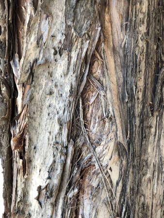 Melaleuca bark photography