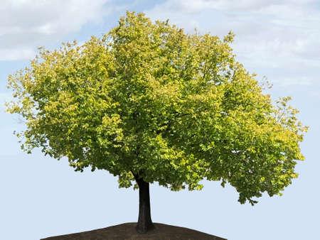 Golden elm, photographic pictures Banque d'images