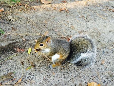 chipmunk eten