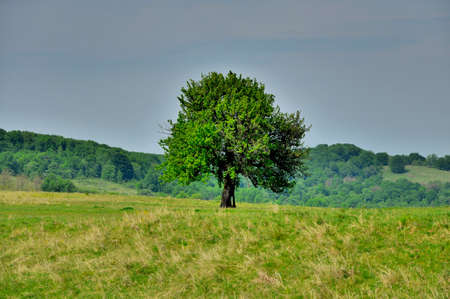 struck: The survival - A tree struck by lightning strike