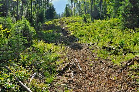 exploitation: Wood exploitation funicular path Stock Photo
