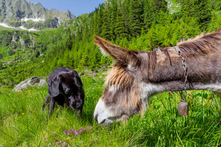 Friendship of donkey and dog.Multicultural friendship stories. Stock Photo