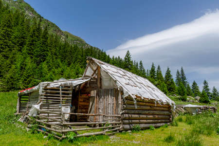 sheepfold: Abandoned wooden sheepfold in Carpathians mountains near the pinetrees forest