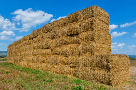 Straw or hay stacked in a field after harvesting Stock Photo