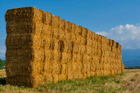 Straw or hay stacked in a field after harvesting in the sunset light.