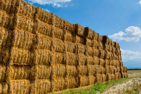 compress: Straw or hay stacked in a field after harvesting. Straw bale wall.