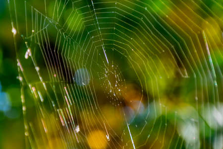 Green bokeh background with close up spider web. Stock Photo
