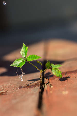 changing form: A small green plant growing on wood with rain drops