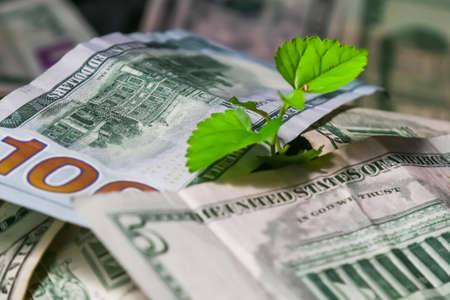A young plant growing from money.Heap of money with seedling.