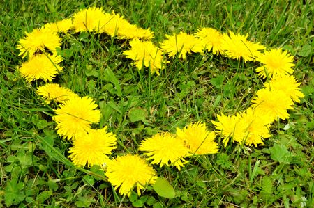 Dandelion heart in the grass Stock Photo