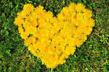 Dandelion heart in the grass photo