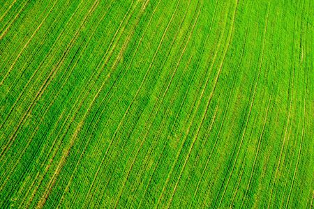 A field in spring - an aerial view