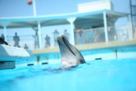 A dolphin in blue water laughing and playing with his head out of the waterA dolphin in blue water laughing and playing with his head out of the water.