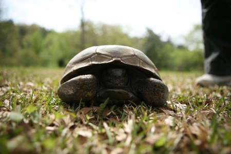 A green tortoise hiding in his shell sitting on grass. Stock Photo