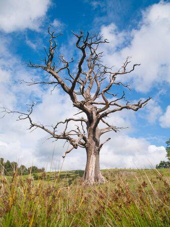 deadwood: lonely spooky dead tree in a field Stock Photo