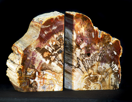 fossilized: fossilized  petrified madagascan tree fossil bookends