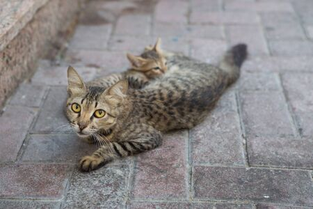 baby  pussy: wild street cat protecting its kittens