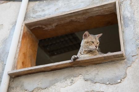 prey: street cat stalking prey from higher ground