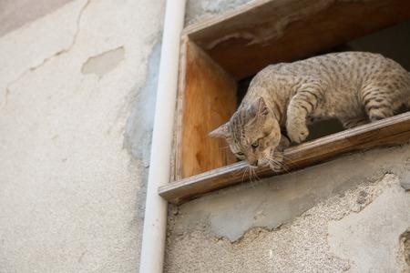 stalking: street cat stalking prey from higher ground