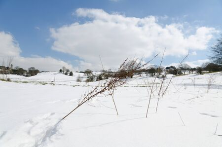 snowy sunny wintery day in a european field with beautiful blue sky