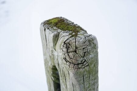 wintery snowy: very old wooden textured gatepost in a snowy white setting