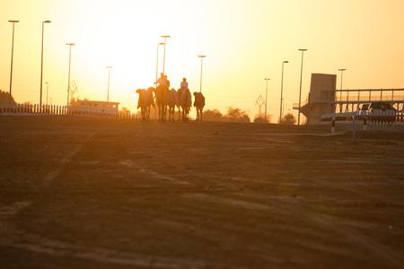 camello: Dubai Las carreras de camellos siluetas club de la puesta del sol de camellos y personas. Foto de archivo