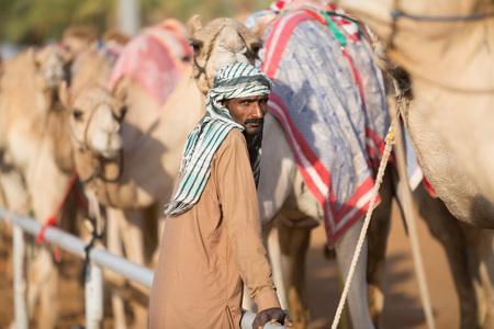 camello: Dubai camellos club de carreras de camellos esperando para correr al atardecer con el portero. Editorial