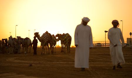 camello: Dubai Las carreras de camellos siluetas club de la puesta del sol de camellos y personas. Editorial