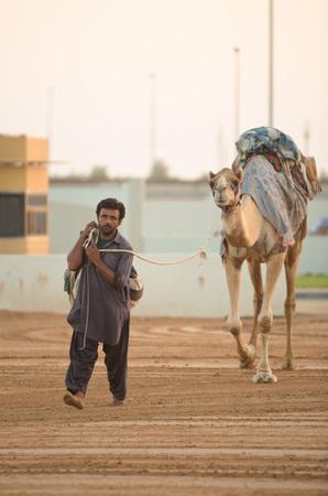 saddle camel: Dubai camel racing club camels taken for warm up walks before racing Editorial