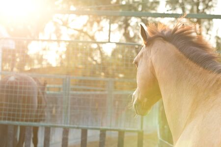 hazy: Horses running in a hazy sunset with soft lens flare