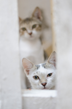 Wild young feral street cats staring at the camera