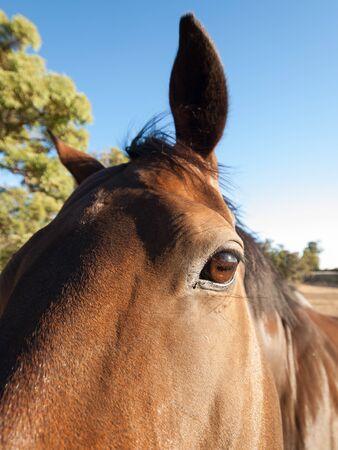 sense of sight: Horses brown eye close up Stock Photo