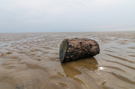 beachcomb: A only piece of driftwood on a gloomy beach Stock Photo