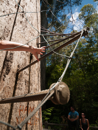 karri: Western Australia, Australia, 10042015, Walpole Nornalup National Park tree climb stair pins