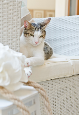 vibe: Cat relaxing on a chair in a beach inspired lounge area Stock Photo