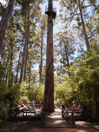 karri: Western Australia, Australia, 10042015, Walpole Nornalup National Park huge pemberton tree climb