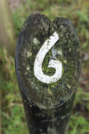 hand carved: rustic number six hand carved into a wooden  marker on a walking trail
