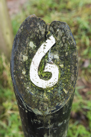 treck: rustic number six hand carved into a wooden  marker on a walking trail