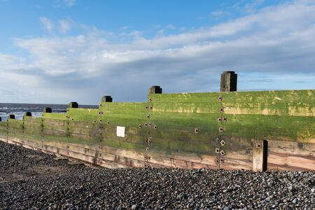 A rustic, weathered wooden sea defence wall, covered in green algae on a beautiful sunny day