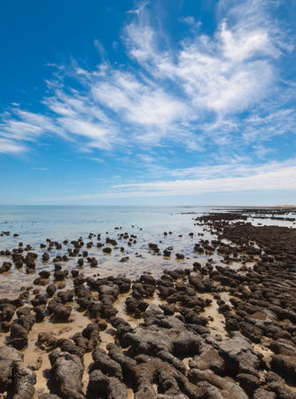 australasia: The Stromatolites in the Area of Shark Bay, Western Australia. Australasia