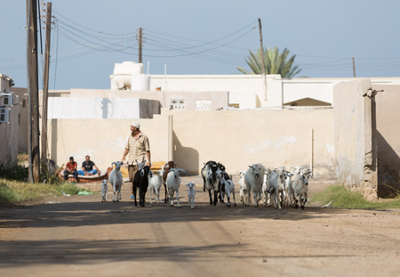Ras Al Khaimah, United Arab Emirates, 202182016, An arab man shepherds his goats through and abandoned village in the middle east.