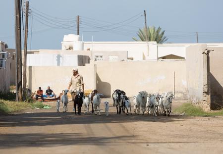 Ras Al Khaimah, Verenigde Arabische Emiraten, 202182016, Een Arabische man herders zijn geiten door en verlaten dorpje in het Midden-Oosten. Stockfoto